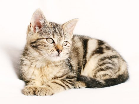 08-august-international-day-of-the-cats